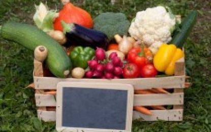 Die schnelle Nummer – Gesundes Essen online bestellen