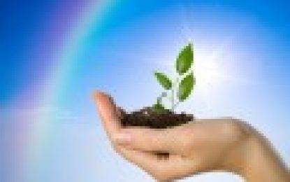 Was Tun Regierung und Unternehmen für die Umwelt